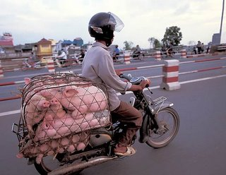 pigs on a bike
